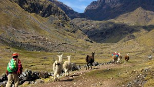 Lares Trek - Saywas Expeditions - 6