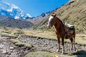 Salkantay Trek - Saywas Expeditions - 12